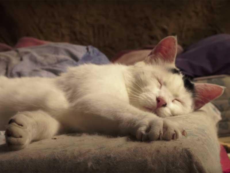 chat endormi zad nddl